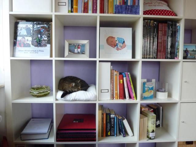 Thimos Shelfie - besonders putzig: das Fach für die Katze : ) Foto: (c) Thimo Ziad