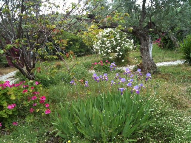 Garten_Kalamata